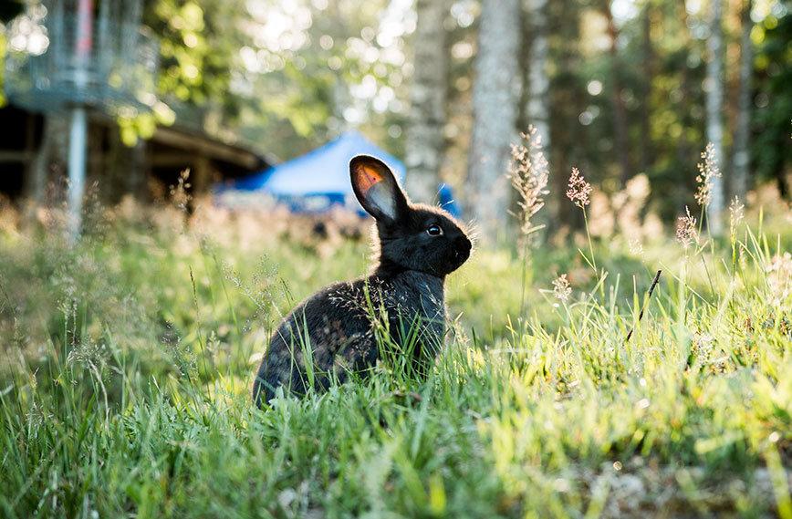 Süßes Schwarzes Kaninchen
