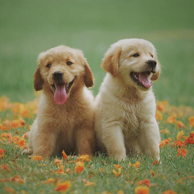 süße-hunde-1