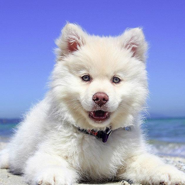 süße-hunde-6