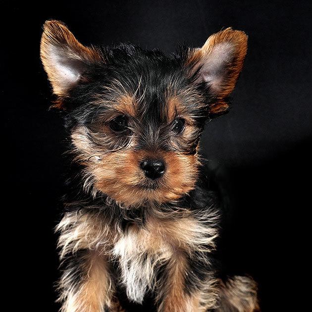 süße-hunde-8